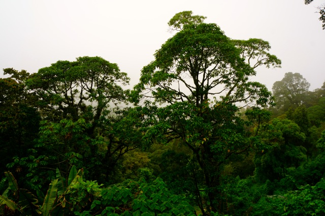 Living in the Rainforest of Costa Rica