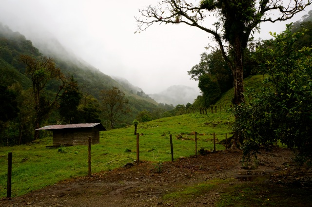 hike through the costa rican rainforest