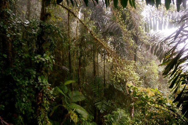 rainforest mist at arenal hanging bridges