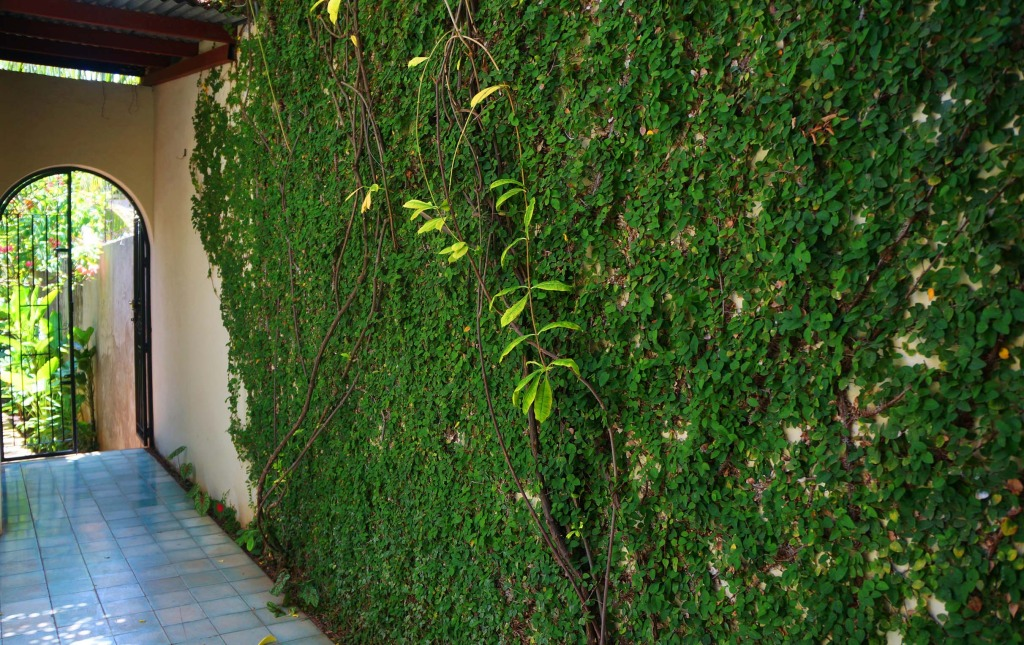 Casa Lucia hotel in granada Garden Wall