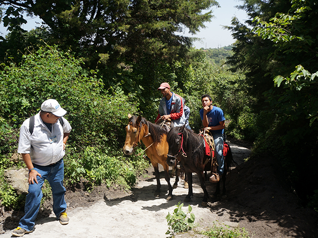 horses follow us to pacaya volcano