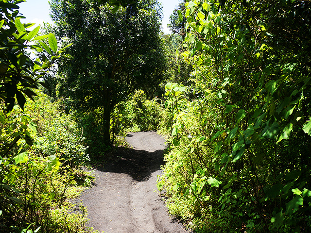 the path up pacaya volcano