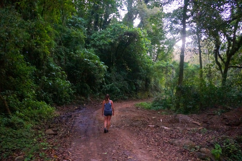 my life in costa rica as an expat- rainforest hikes