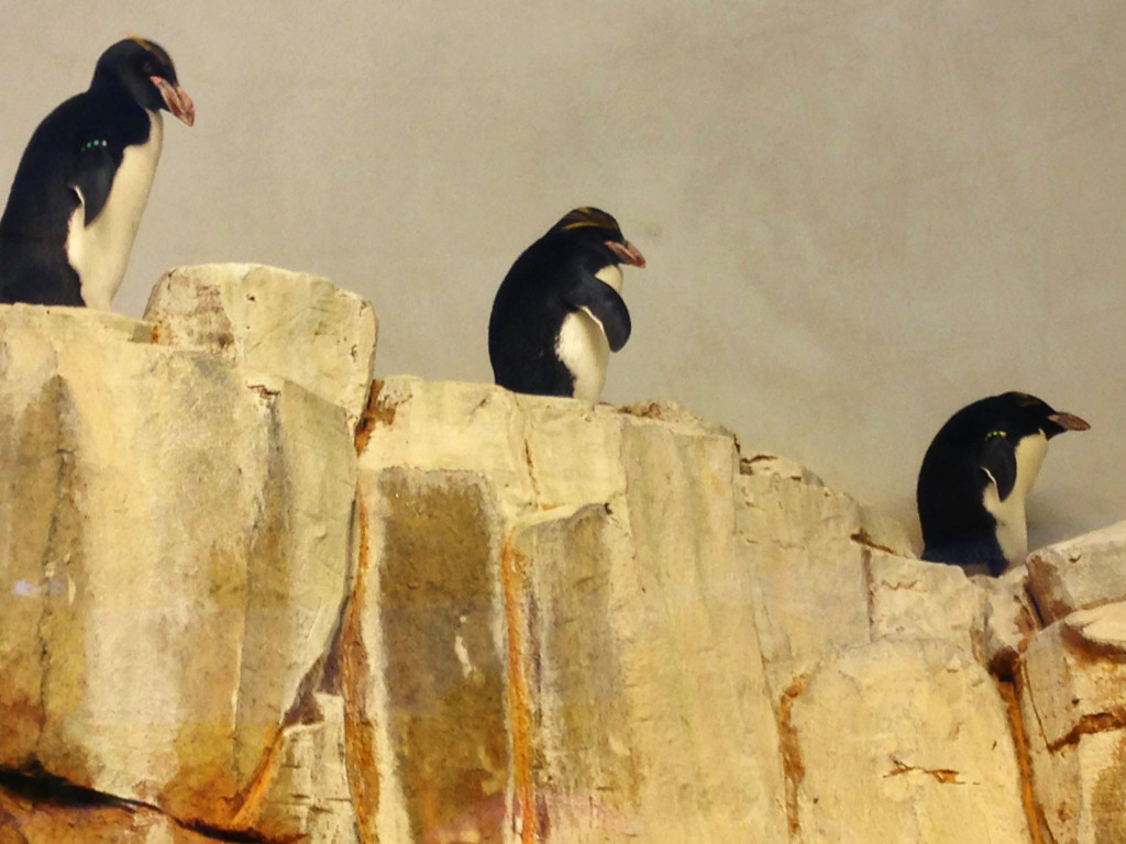 family trip to montreal- penguins at the biodome