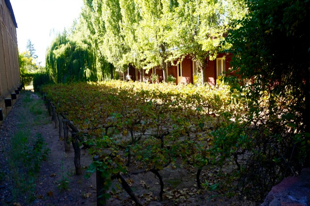 visiting the wineries of mendoza vineyards