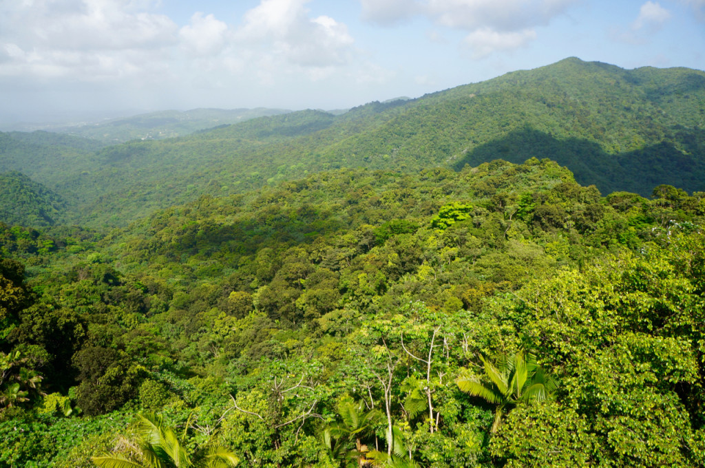 beautiful views rainforest in puerto rico