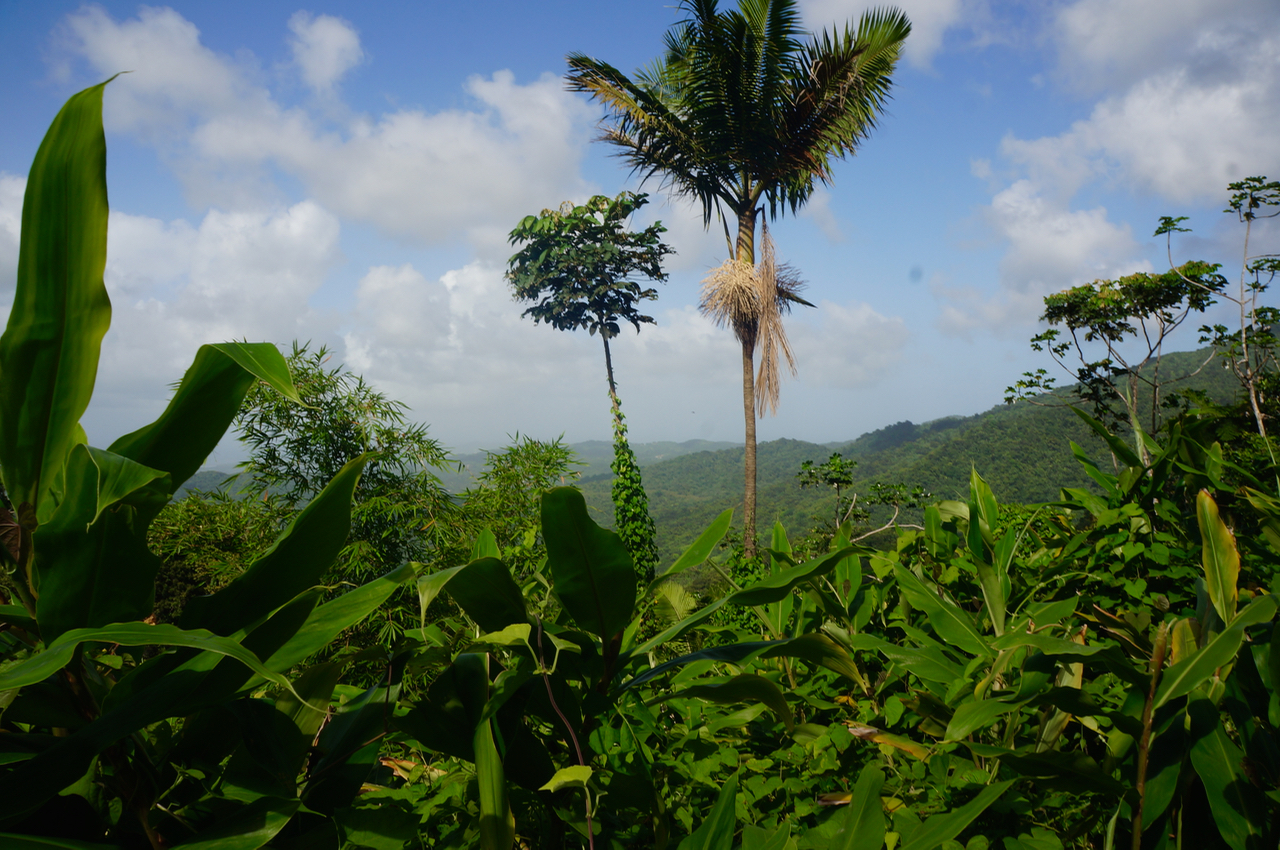 rainforest in puerto rico views